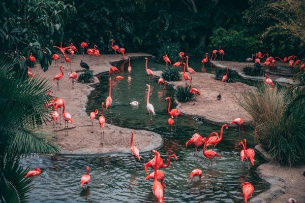 """Kostenloses lizenzfreies Bild der AdSimple Content Marketing Agentur mit dem Titel """"Flamingo-Liebe"""" zu den Stichworten 2018, Frühling"""