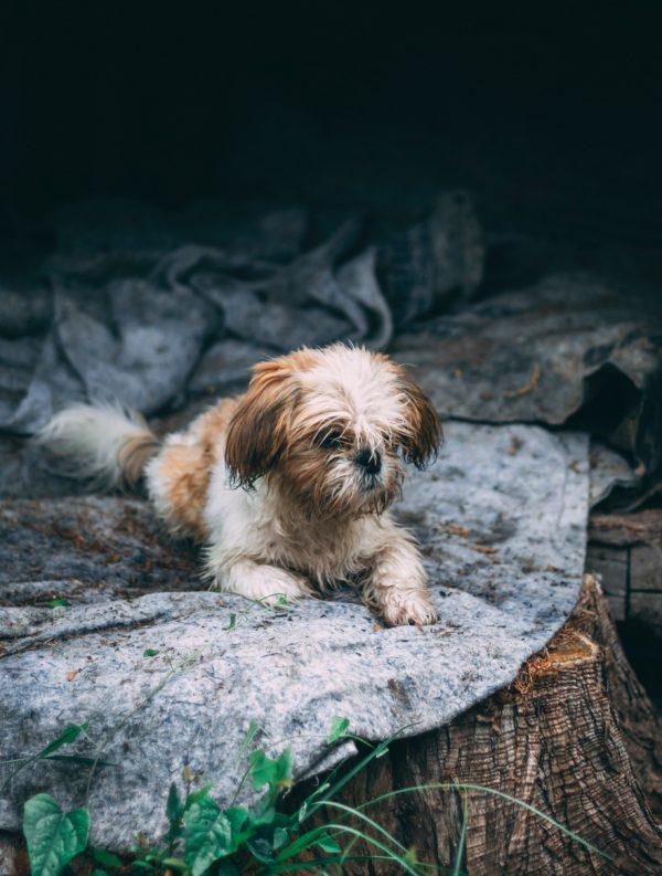 """Kostenloses lizenzfreies Bild der AdSimple Content Marketing Agentur mit dem Titel """"In der Hundehütte"""" zu den Stichworten 2018, Frühling"""